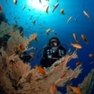 A scuba diver at Elphinstone, in the Red Sea