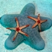 Starfish on the sea floor at Thaa Atoll
