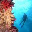 Diving in the Somosomo Strait with Fiji liveaboards