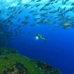 Scuba diving at Socorro Island, Mexico