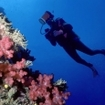 Scuba diving at Beqa Island, Fiji