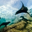 Sea lions play in the Sea of Cortez, Baja California