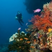 Scuba diving on the reefs of Bligh Water