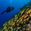 PADI Adventure Diver - Underwater Photography