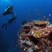 Liveaboard diving safaris in the Maldive Islands