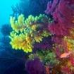 Scuba diving in Flores, Indonesia