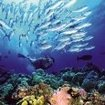 Scuba diving in the Coral Sea, Australia