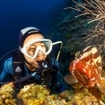 A scuba diver with a Nassau grouper