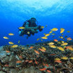 Deift diving over the hard coral reefs of Lembongan, Bali