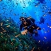 Scuba diving at Sail Rock, Koh Samui in Thailand