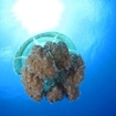 Jellyfish in Phi Phi can make superb photographis subjects