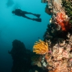 Diving in Apo Reef