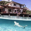 A blacktip reef shark investigates Misool Eco Resort's dive centre