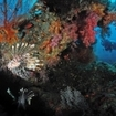 Diving in Thiland with lionfish