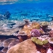 A vibrant coral reef at Ari Atoll, Maldives