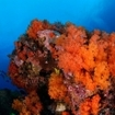 Colourful reef scene from diving at Sahaung Pinnacle