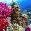 A colourful reef scene in Viti Levu