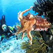Dive with cuttlefish in Gili Lawa