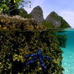The beautiful islands of Raja Ampat