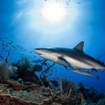 Sharks are one of Cuba's biggest drawcards