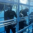 Scuba divers in the cage