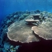 A hard coral reef and wall drop off in Wakatobi, Indonesia