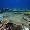 A reef of table corals at South Male Atoll
