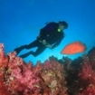 A scuba diver explores Breakfast Bend