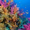 A colourful reef scene from Layang Layang, Malaysia
