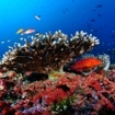 A colourful reef scene from the Far North Atolls, Maldives
