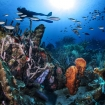 Fabulous reef diving in Saba and Saint Kitts