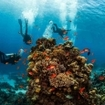 A group of divers examine a vivid coral reef formation. Red Sea, Egypt