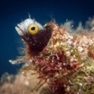A goby makes a home in the coral substrate