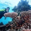 A diver explores a reef at Palau Tioman
