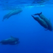 The dolphins of Roatan