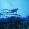 Check out the barracuda when diving Blue Corner