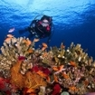 Explore the colourful coral reefs of Taveuni, Fiji