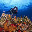 Exploring the colourful coral reefs of Taveuni, Fiji