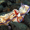 Nudibranchs in a riot of colours can be found in Australia