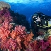 Diving with colourful soft corals in Fiji