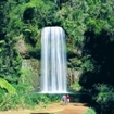 Millaa Millaa Falls in northern Queensland