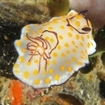 A nudibranch at Koh Dork Mai