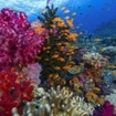 A vivid colourful reef scene at Viti Levu, Fiji