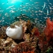 A reef scene from Ao Nang's dive sites