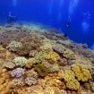Scuba diving in the Visayas