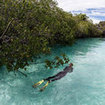 Snorkelling in the mangroves in Raja Ampat, Indonesia