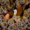 Anemonefish are at home in Mindoro