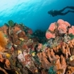 Scuba diving on the coast of Ambon, Maluku