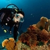 A diver with a scorpionfish at Three Trees