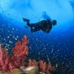 A scuba diver with soft corals at Hin Daeng, south of Thailand